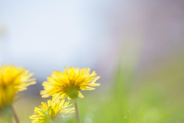 誕生花って何?5月の誕生花にはどんな花があるの?