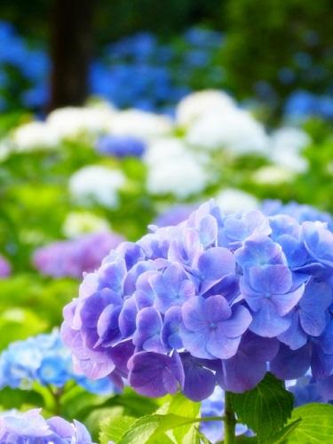 誕生花って何?7月の誕生花にはどんな花があるの?
