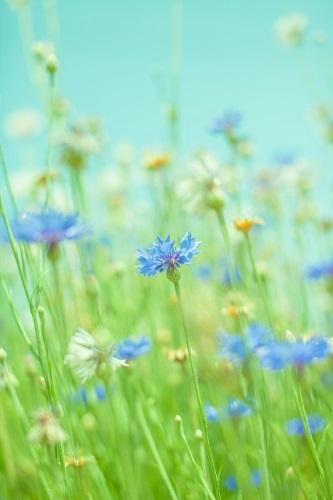 誕生花って何?8月の誕生花にはどんな花があるの?