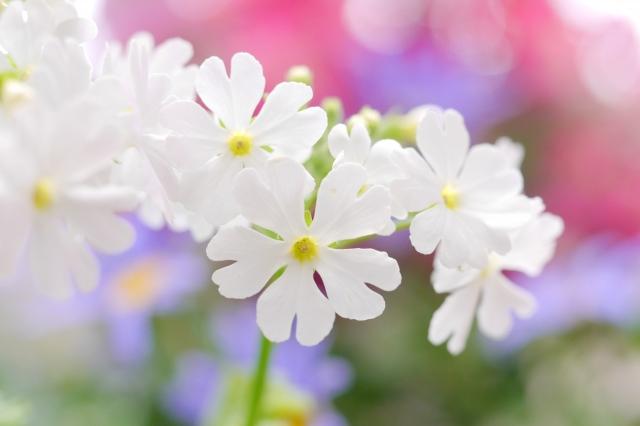 誕生花って何?9月の誕生花にはどんな花があるの?