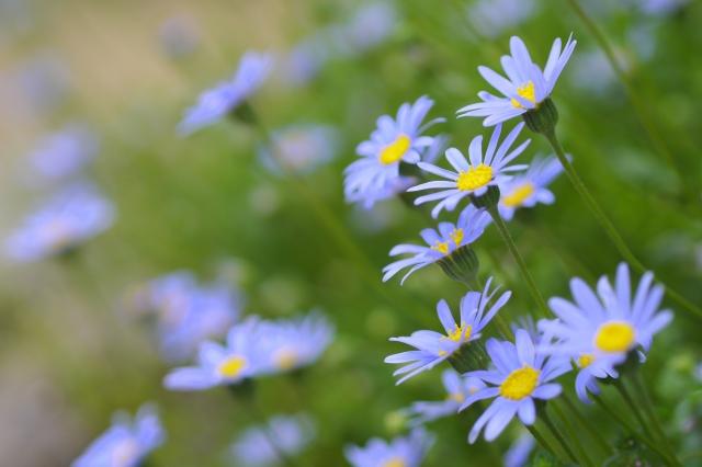 棘(トゲ)のある花にはどんな花があるの?