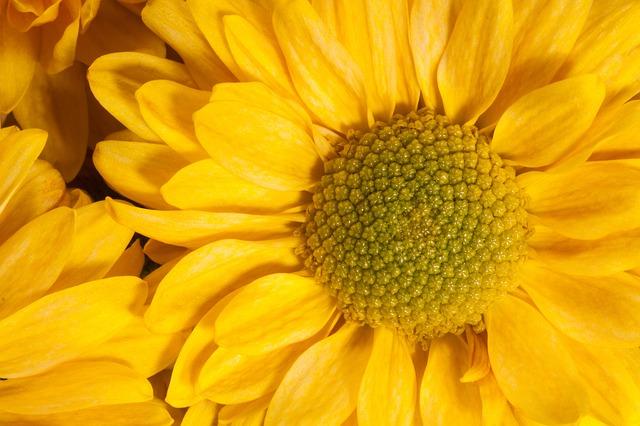 トルコギキョウ 花言葉