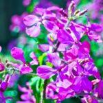 ベゴニアの花言葉や由来とは?四季咲きベゴニアの育て方は?