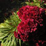 秋に咲く花でガーデニング!人気の花をランキングでご紹介!
