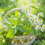 薬になる花にはどんな花があるの?