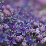 毒を持っている花~毒のある花にはどんな花があるの?~