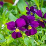 冬に咲く花でガーデニング!人気の花をランキングでご紹介!