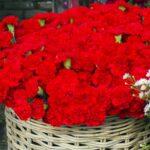 5月に咲く花と言えば何?花の特徴や花言葉も合わせてご紹介!