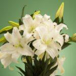 7月生まれの人に贈りたい花は?誕生日にピッタリな花言葉もご紹介