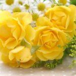 絶対に贈ってはいけない花は何?悪い意味を持つ花言葉を要チェック!