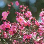誕生花って何?2月の誕生花にはどんな花があるの?