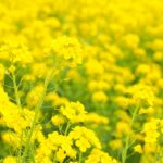 誕生花って何?3月の誕生花にはどんな花があるの?