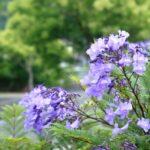 誕生花って何?6月の誕生花にはどんな花があるの?